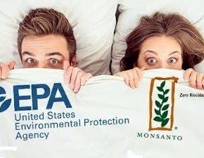 la-epa-aprobo-otro-herbicida-toxico-de-monsanto_large